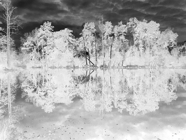 marilyn carren lake neg